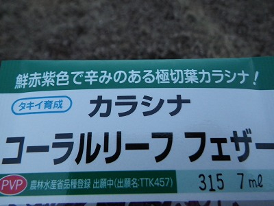 IMG3268.jpg