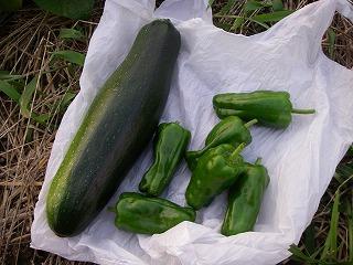 今日の無農薬野菜です.jpg