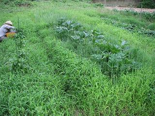 雑草だらけの畑.jpg