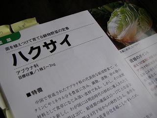秋冬野菜の定番白菜.jpg