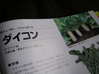 秋冬野菜の定番大根.jpg