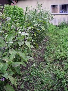 野菜作りは雑草との戦い.jpg