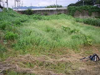 畑が草むらに・・・.jpg