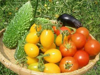 無農薬栽培の夏野菜.jpg