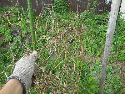 秋冬野菜の用意
