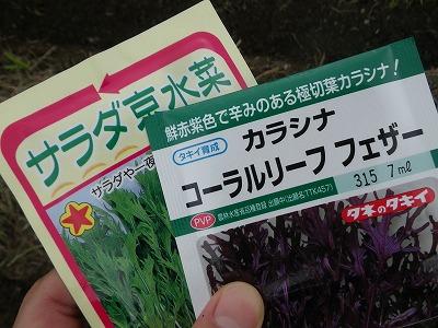 秋冬野菜種まき