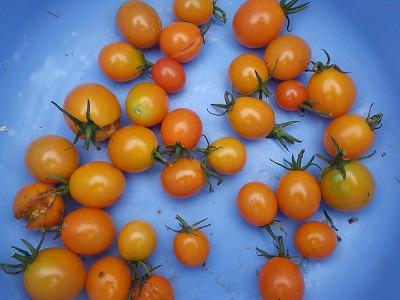 トマトとラッカセイ