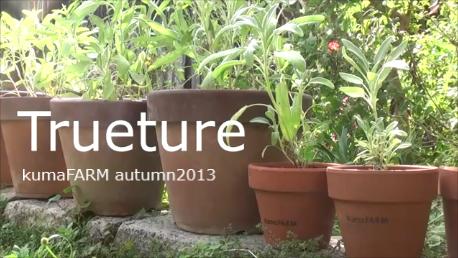kumaFARM autumn 2013