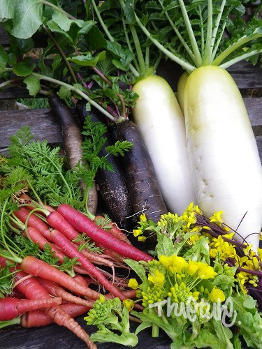 お正月野菜