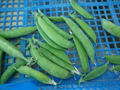 kumaFARMの体験農園「畑のがっこう」