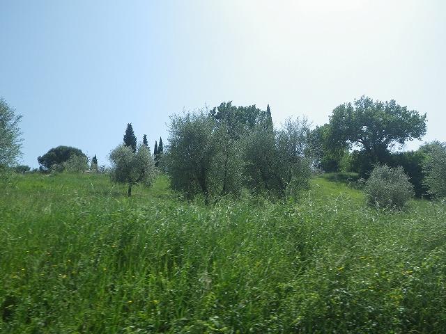 18.イタリア・フィレンツェ・シエナ・農業・観光