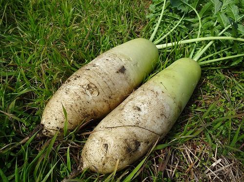 年越し野菜